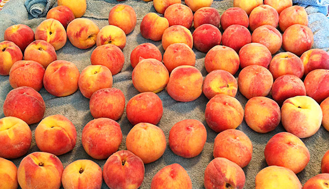 Millions-of-Peaches